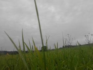 príroda- leto.